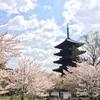 京都の休日①五重の塔と桜〜お花見@東寺