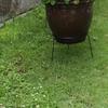 薄くなった芝生を緑色に復活できる植物