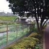 野川緑道を行く