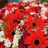 置かれた場所で咲かない花も多々ある(環境はどんどん変えよう)