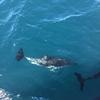 NZ 1人旅 カイコウラでイルカが見たい!!!