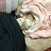 犬専用のお部屋✨✨ 〜朝から、昼、晩 よく眠る麿さん✨✨〜おススメドックフードのご紹介🐶