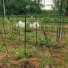雨の止み間のラボ1畑②