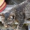 猫の話(3)