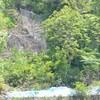 落石防止ネット ブルーベリーの苗木 オリーブ班 母の絵 ブルーベリー園