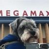 【千葉県/印西市】犬OK!🐶『メガマックス千葉NT店』に行ってみた