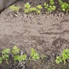 堆肥の違い、初心者に無難な堆肥はどれか