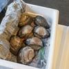 2020年9月18日 小浜漁港 お魚情報