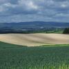 美瑛の丘の土の色