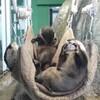 江ノ島水族館を楽しむ!可愛いカワウソの密。