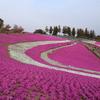 おおた芝桜まつり(※春限定)|芝桜とネモフィラの名所の公園:群馬県太田市