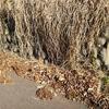 側溝の落ち葉掃除 詰まりの事前対策