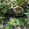 庭に池の楽しさ