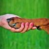 犬のキスの意味とは…愛情表現?おねだり?病気はうつらないの?