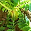 BSJ複合菌肥料による野菜の栽培 記録用