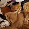 スクラップの下に隠れていた子猫たちを保護、初めは人間を怖がっていたが・・・・・・