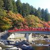 愛知県香嵐渓の紅葉が見頃を迎えます