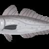 スペースワールド魚氷漬け事件について
