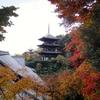 しだれもみじの美しい庭園 奈良・當麻寺西南院