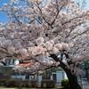 2015・桜