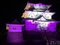【動画あり】難攻不落と言われた小田原城で開催されている冬桜イルミネーション
