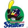 東京以外でヤクルトスワローズの試合を生中継で見る方法は?料金やサービスも解説!