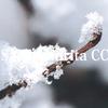 冬の森、小さな生命を宿した宝石たち(ゼフィルス卵 Ⅰ )