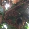 浜松市で垣根にできたスズメバチの巣を駆除してきました