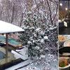 栃木県(関東)の雪見温泉の宿・雪見露天風呂のある温泉旅館・ホテルを教えて!