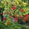 Canon「EOS R5」で「秋田県立小泉潟公園・水心苑」の紅葉を〜「RF50㎜L F1.2 USM」と「RF70-200㎜ F2.8L IS USM」で〜