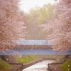桜の季節に鬼が来る!春になると学校が「賽の河原」に見える