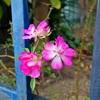 庭先の花&果樹