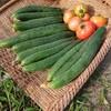 無農薬BlackBerryブラックベリー販売@新潟市北区EMBC複合発酵バイオで栽培する健康農産物の会