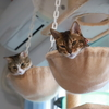 猫タワーの耐震問題。