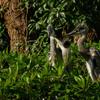 野鳥の島で一番近くで撮影できるアオサギの雛たち