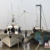 上海の浦東海岸でクジラの死骸が見つかったらしい