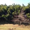 竹と桜と菊と
