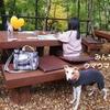 箱根のススキとサンマ釜飯