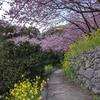 [四国旅行記①]いろいろ中止でも花は咲く~冬の桜を見て春の訪れを感じる~