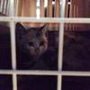 真っ黒な仔猫