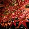 2016年京都の紅葉の美しい寺・京都に20年住んでる私がおススメします。