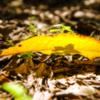 落ち葉は秋の日差し浴び 秋の気配を影絵に映して
