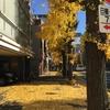 黄色い道でカワイイ(でも臭い)木の実を拾った。