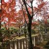 京都の紅葉寺社巡りは観光客に阻まれ退散