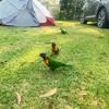【オーストラリアキャンプ】オーストラリアのキャンプ事情まとめました