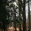 ほのぼの冬林