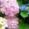 【鎌倉女子旅①】そうだ!あじさいを見に行こう。~鎌倉駅到着、まずは銭洗財天へ~