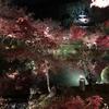 「永観堂」の闇夜に浮かぶ幽玄な極楽橋と逆さ紅葉