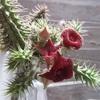イボイボの花