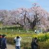 郡山・三春 桜三昧ツーリング■滝桜 ちょうど満開